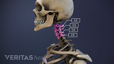 Profile view of the cervical spine with C2-C5 highlighted.