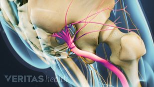 Animated video still of left sciatic nerve