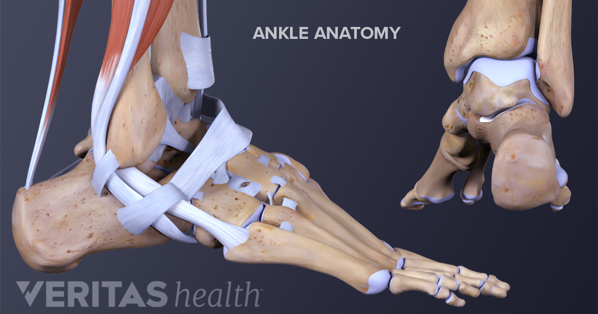 Ankle Arthritis Symptoms Arthritis Health
