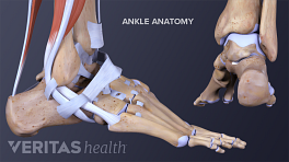 Profile and posterior view of the ankle anatomy