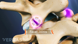 There are two facet joints at each level of the vertebral column, providing stability to the spinal column while allowing movement