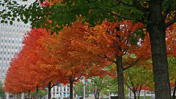 Cooler Leaves