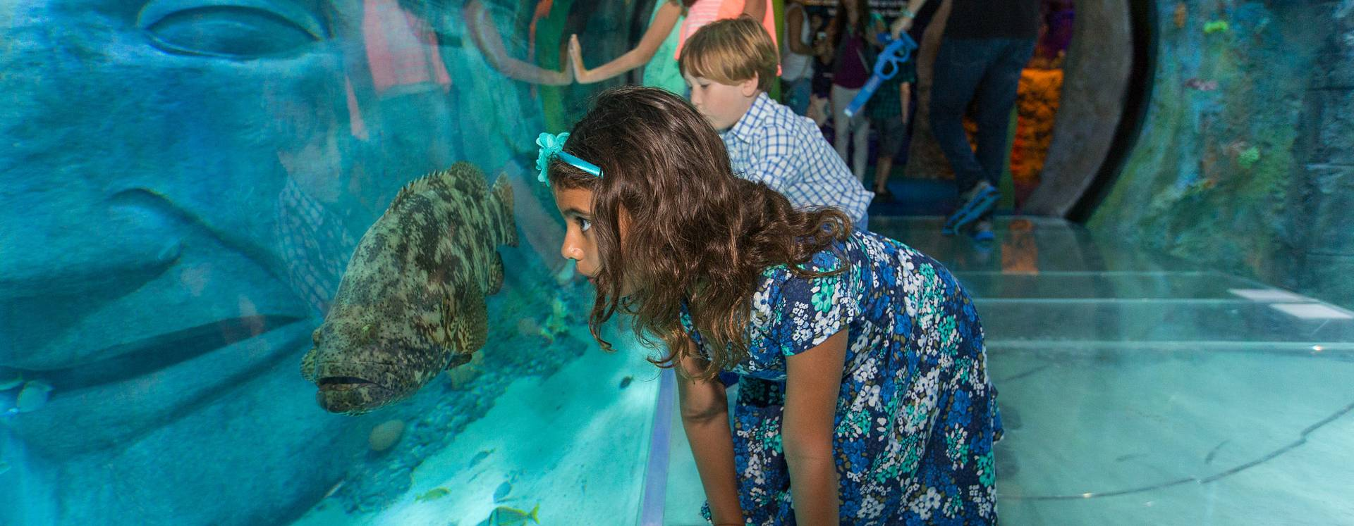 A girl crouching and looking at a fish, while in the tunnel of SEA LIFE Orlando Aquarium