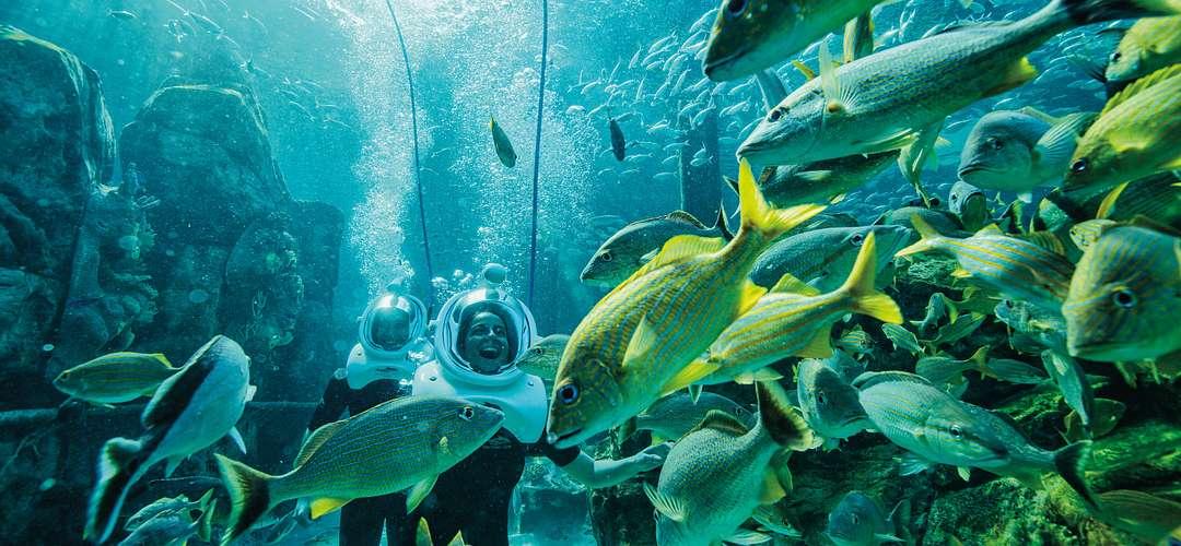 Um casal com capacetes de mergulho explorando embaixo d'água com peixes nadando de fundo no Discovery Cove.