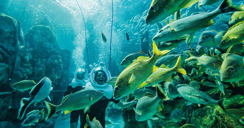 A couple with dive helmets exploring underwater with fish swimming in the foreground at Discovery Cove.