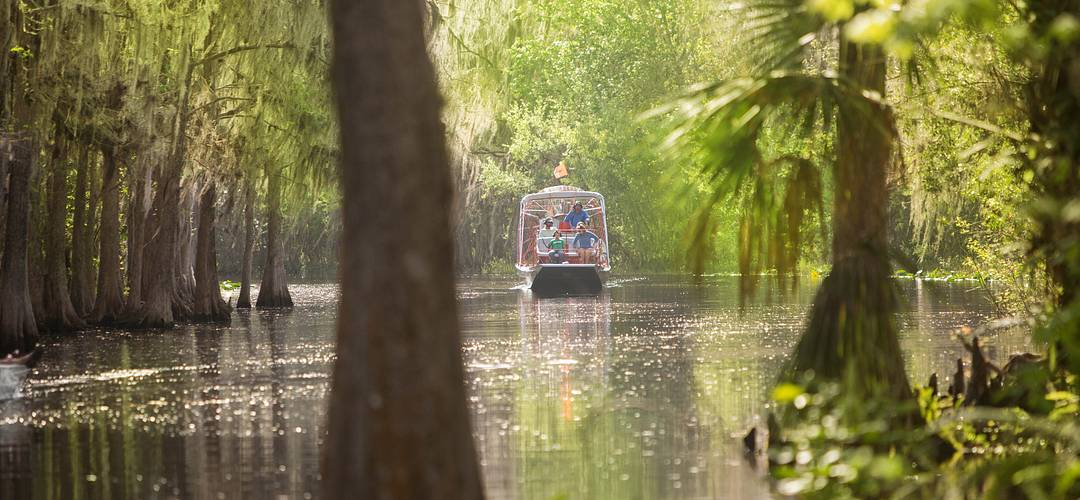 airboat navigating through a sun-drenched swamp