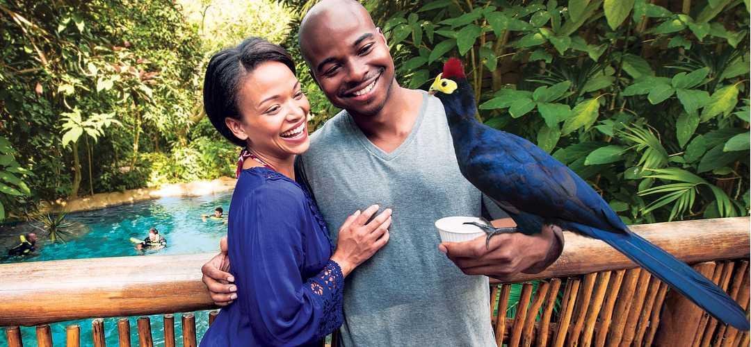 Casal se abraçando com um pássaro exótico pousado no punho do homem