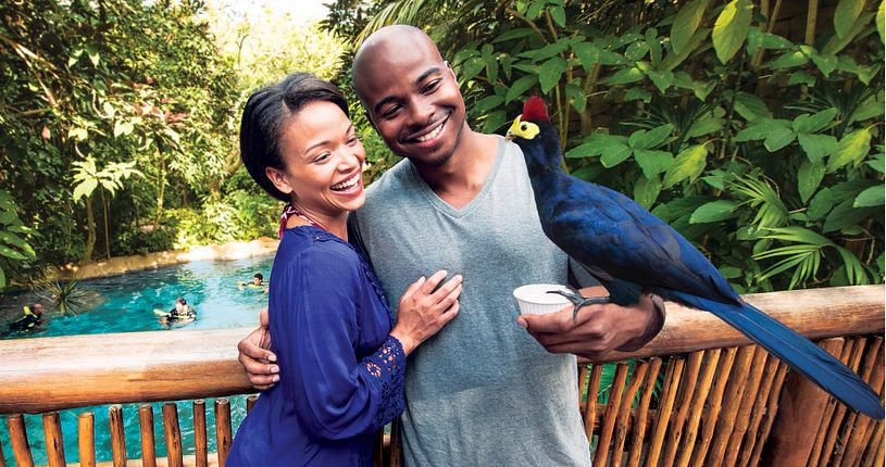 Couple hugging with an exotic bird perched on his wrist