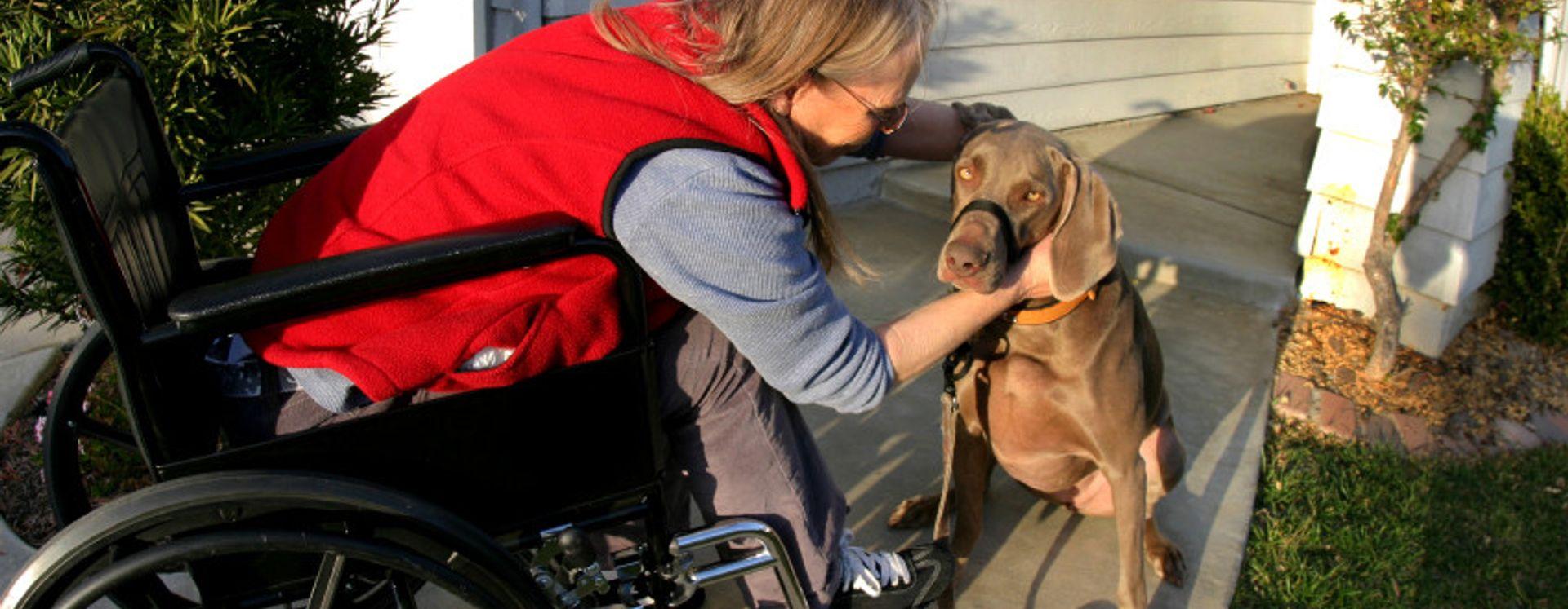 mulher adulta cão de serviço vermelho pessoas brancas animal doméstico calçada casa cadeira de rodas deficiente