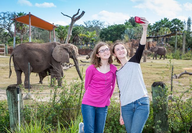 Take a Selfie With Elephants and Other Wild Creatures at ZooTampa