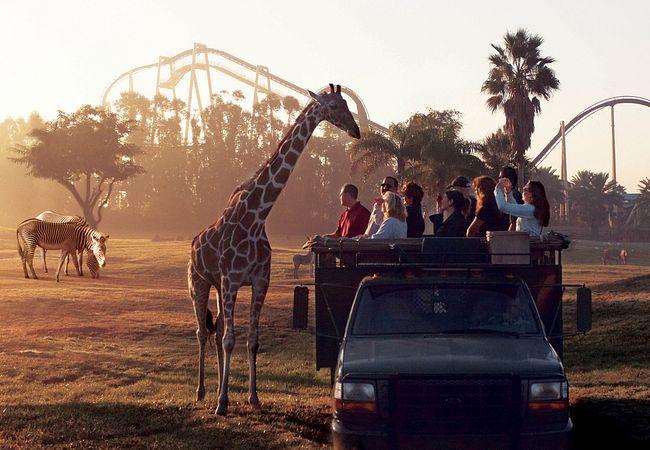 Serengeti Safari at Busch Gardens Tampa Bay (© SeaWorld Parks & Entertainment)