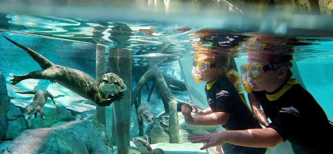 Crianças mergulhando e observando lontras embaixo d'água no Discovery Cove.
