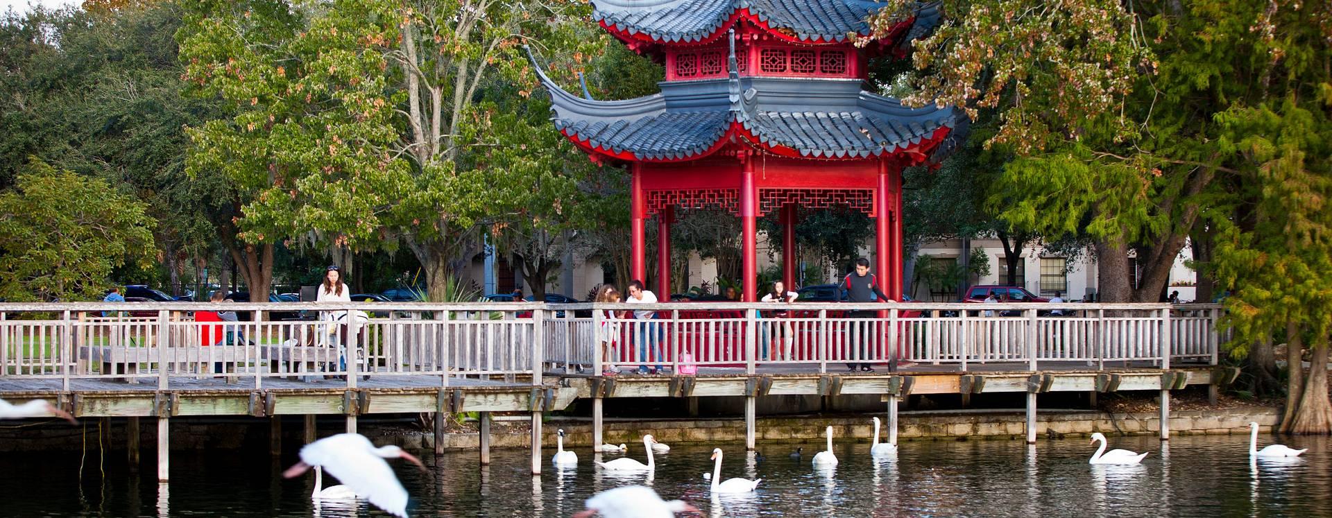 Pessoas admirando os cisnes no Lake Eola com uma tenda chinesa vermelha ao fundo, rodeada por árvores.