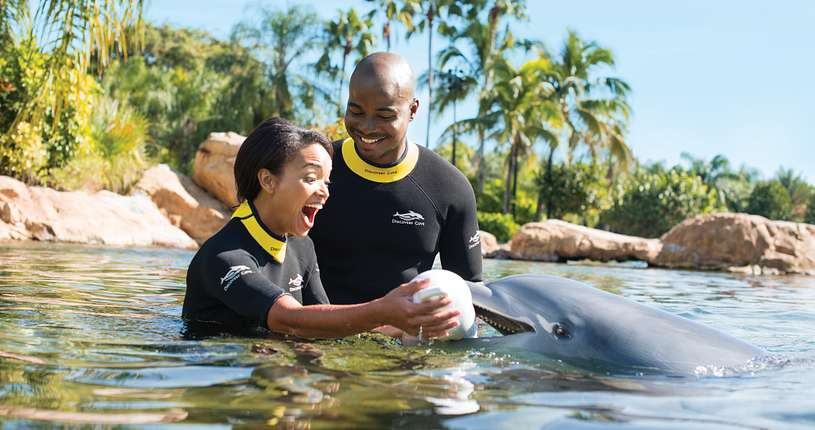 A helpful dolphin delivers a proposal.