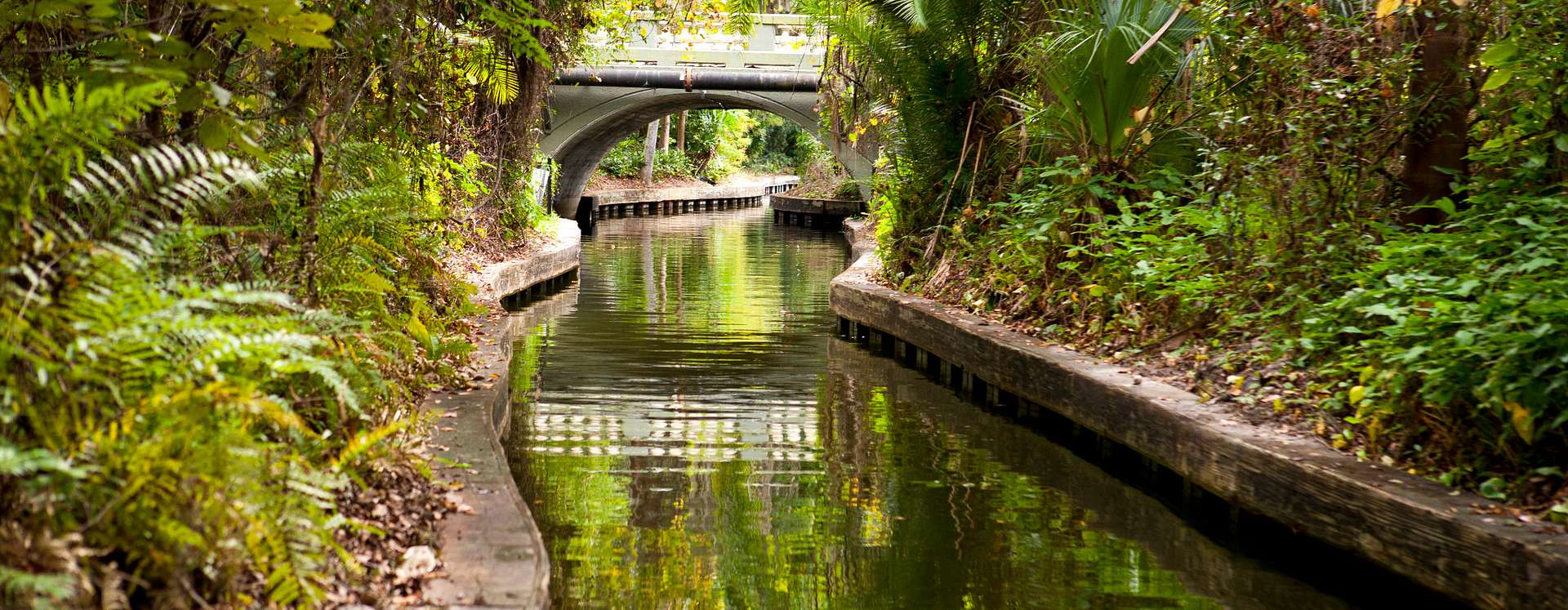 Canal along the Winter Park Scenic Boat Tour