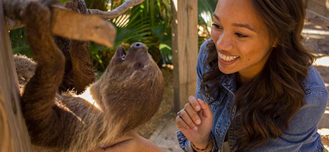 Woman petting a sloth at Wild Florida Airboats