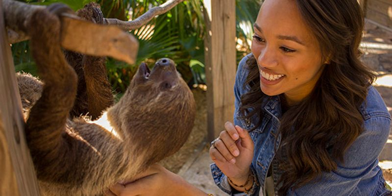 Woman petting a sloth