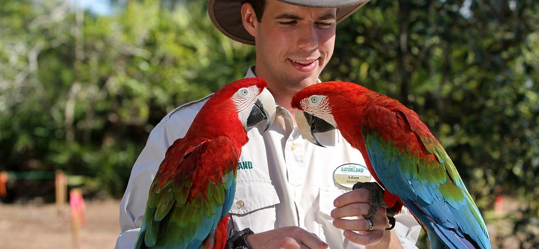 Gatorland employee holding two parrots