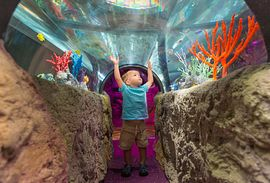 Underwater adventures with more than 5000 species at Sea Life Auarium