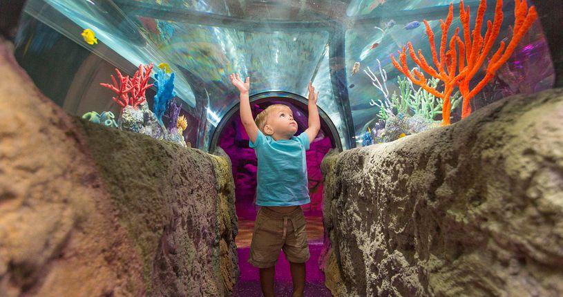 SEA LIFE Orlando Aquarium little boy with hands raised in underwater tunnel