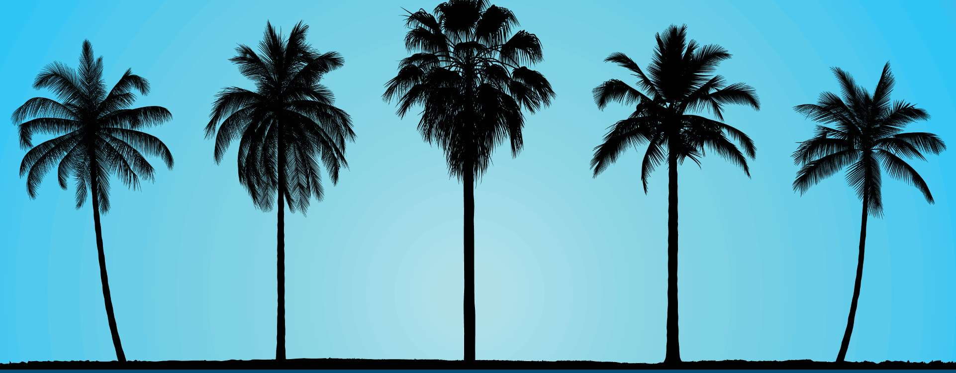 Palm trees in front of a blue sky