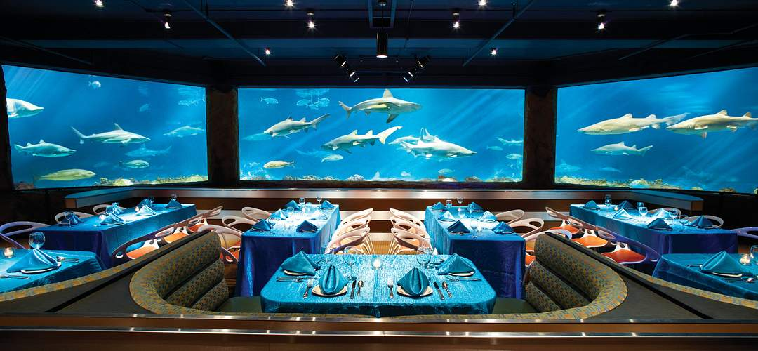 Vista al lado de la mesa del chef con tiburones nadando en el fondo en Sharks Underwater Grill, SeaWorld Orlando.