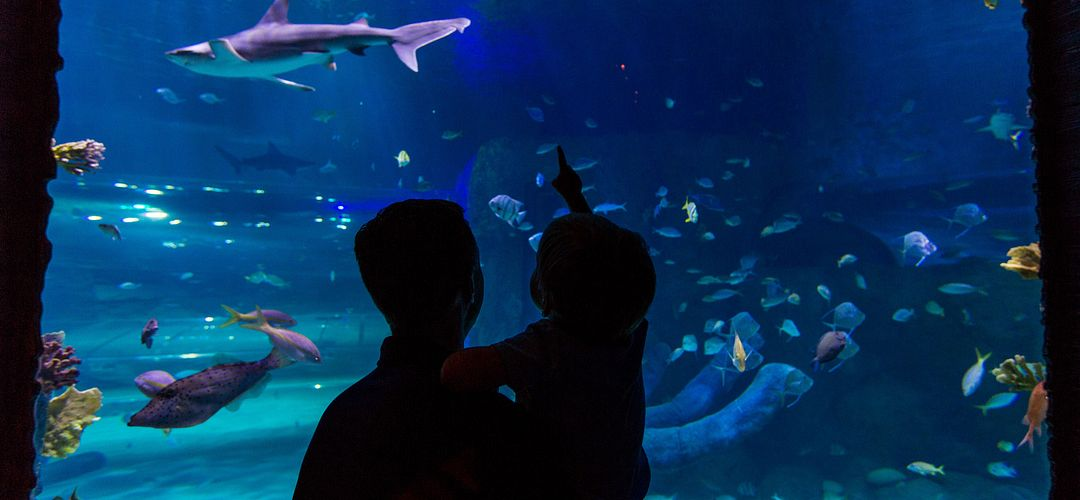 Silhouette of father and son in front of an aquarium