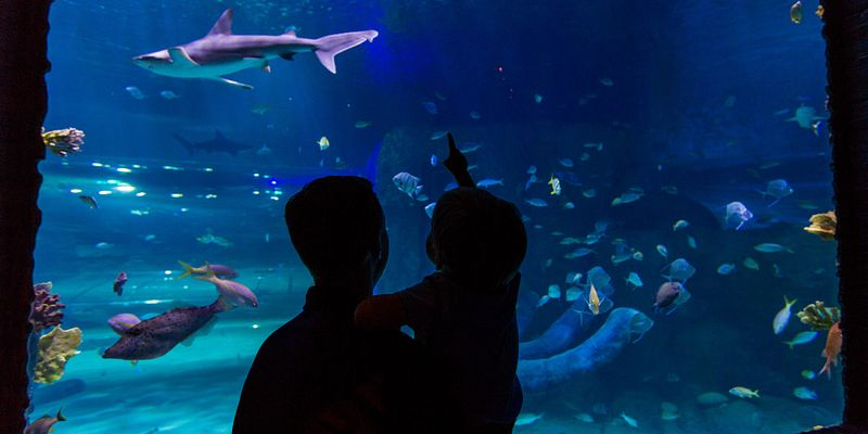 silhoutte of father and son in front of an aquarium