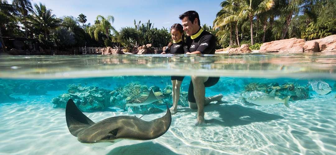 Uma arraia passa por um pai e uma filha na água.