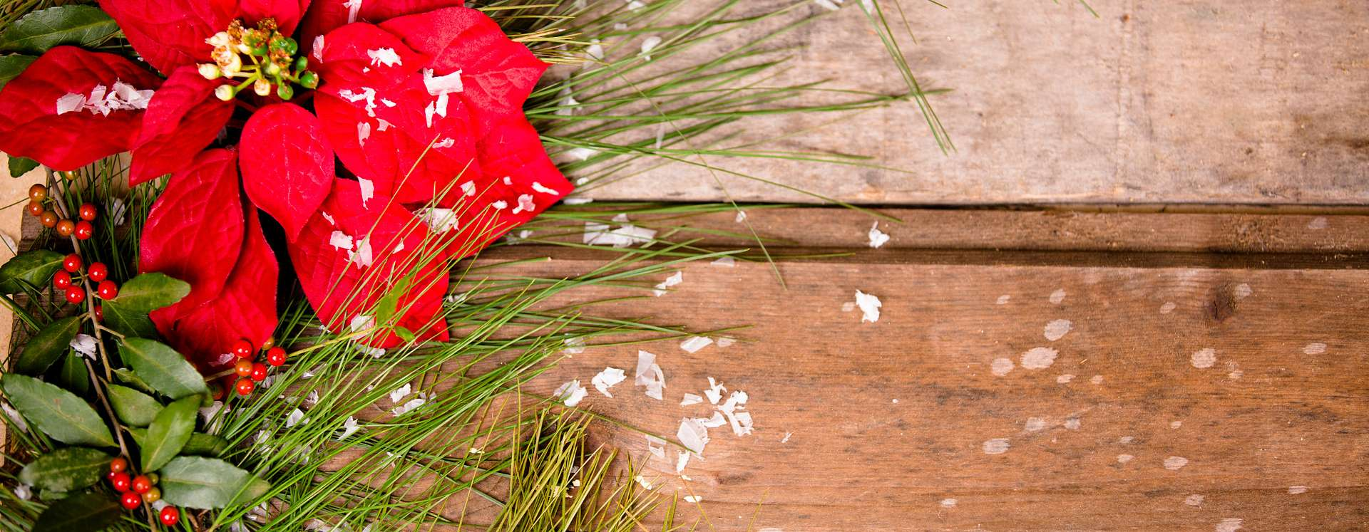 A festive holiday poinsettia on a wood background.