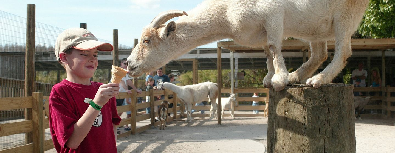 3295_goats.jpg