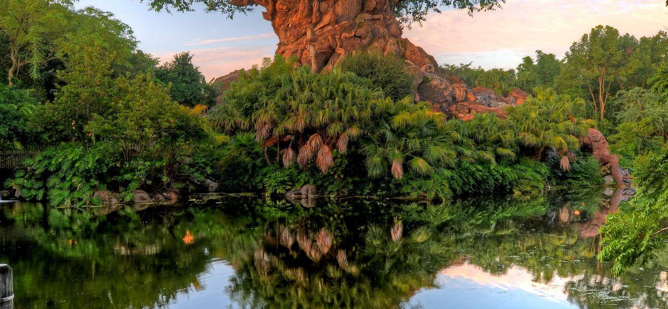 Tree of Life at Disney's Animal Kingdom Theme Park