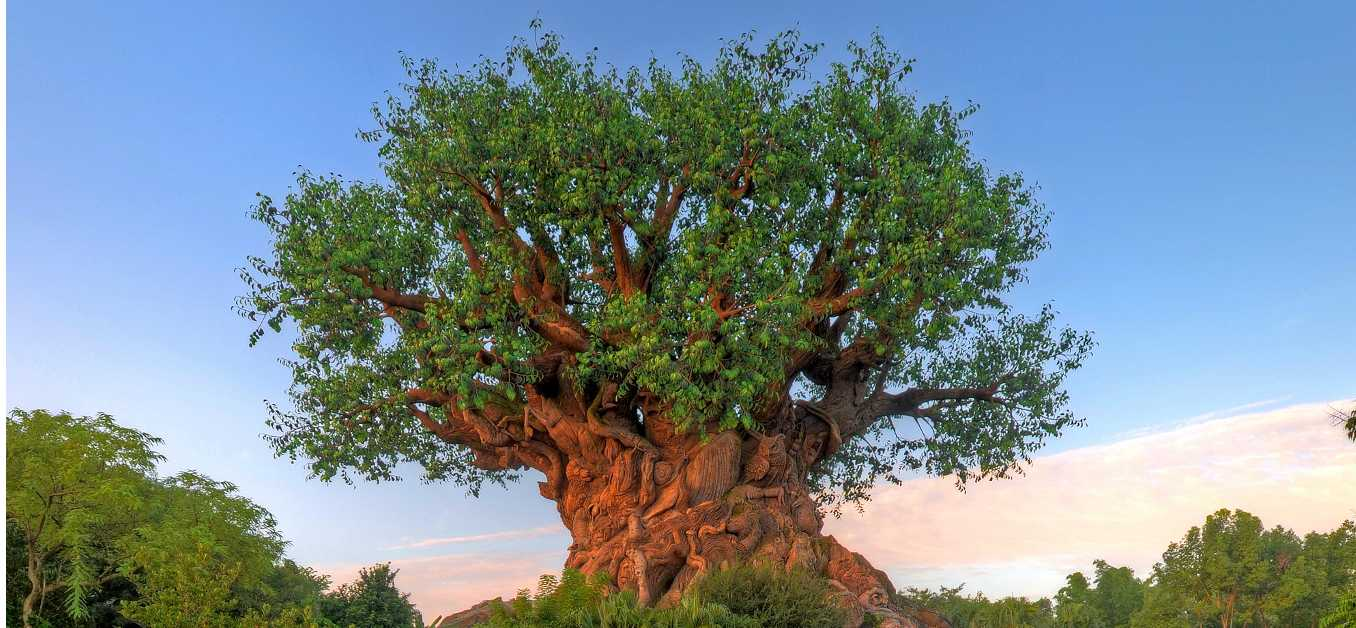 Tree of Life at Disney's Animal Kingdom Theme Park