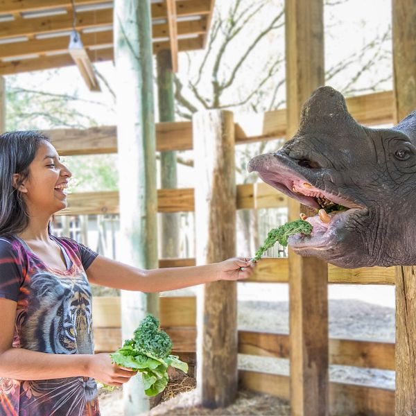 Discounted Tampa's Lowry Park Zoo Tickets