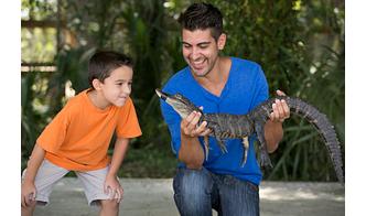Wild Florida Gator Park