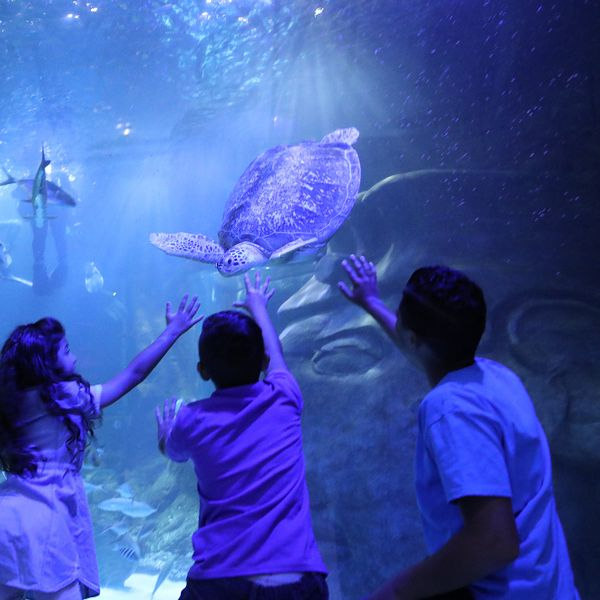 Discounted admission to Sea Life Aquarium Orlando.