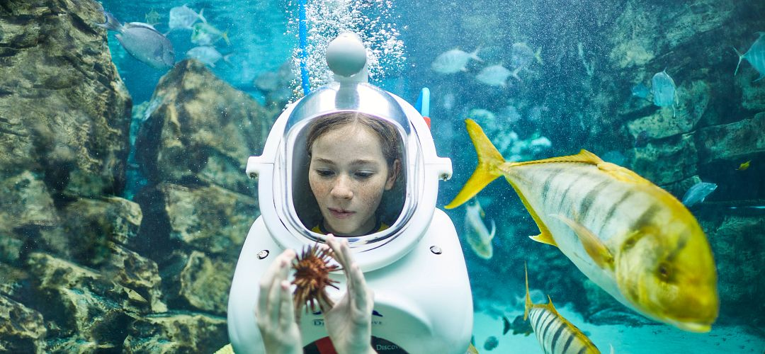 A girl underwater touching a sea urchin at SeaVenture: Underwater Walking Tour in Discovery Cove.