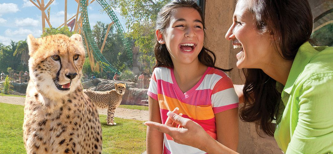A mother and daughter admiring a cheetah at Busch Gardens Tampa Bay