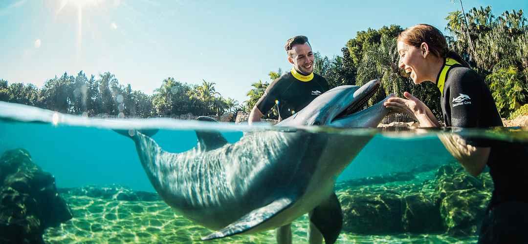 um casal interagindo com golfinhos em discovey cove
