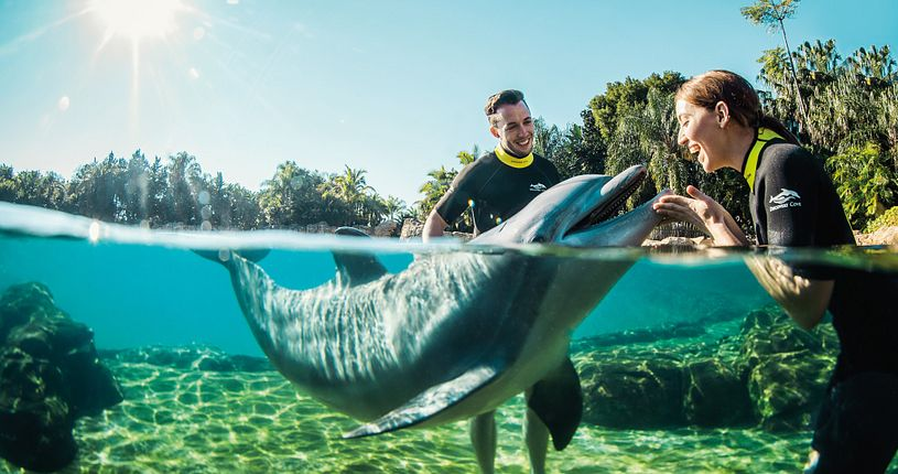 A friendly dolphin enjoys interacting with a guest in the water at Discovery Cove.