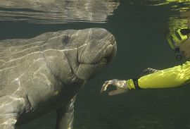 Florida Dolphin Tours Featured Adventure Excursions