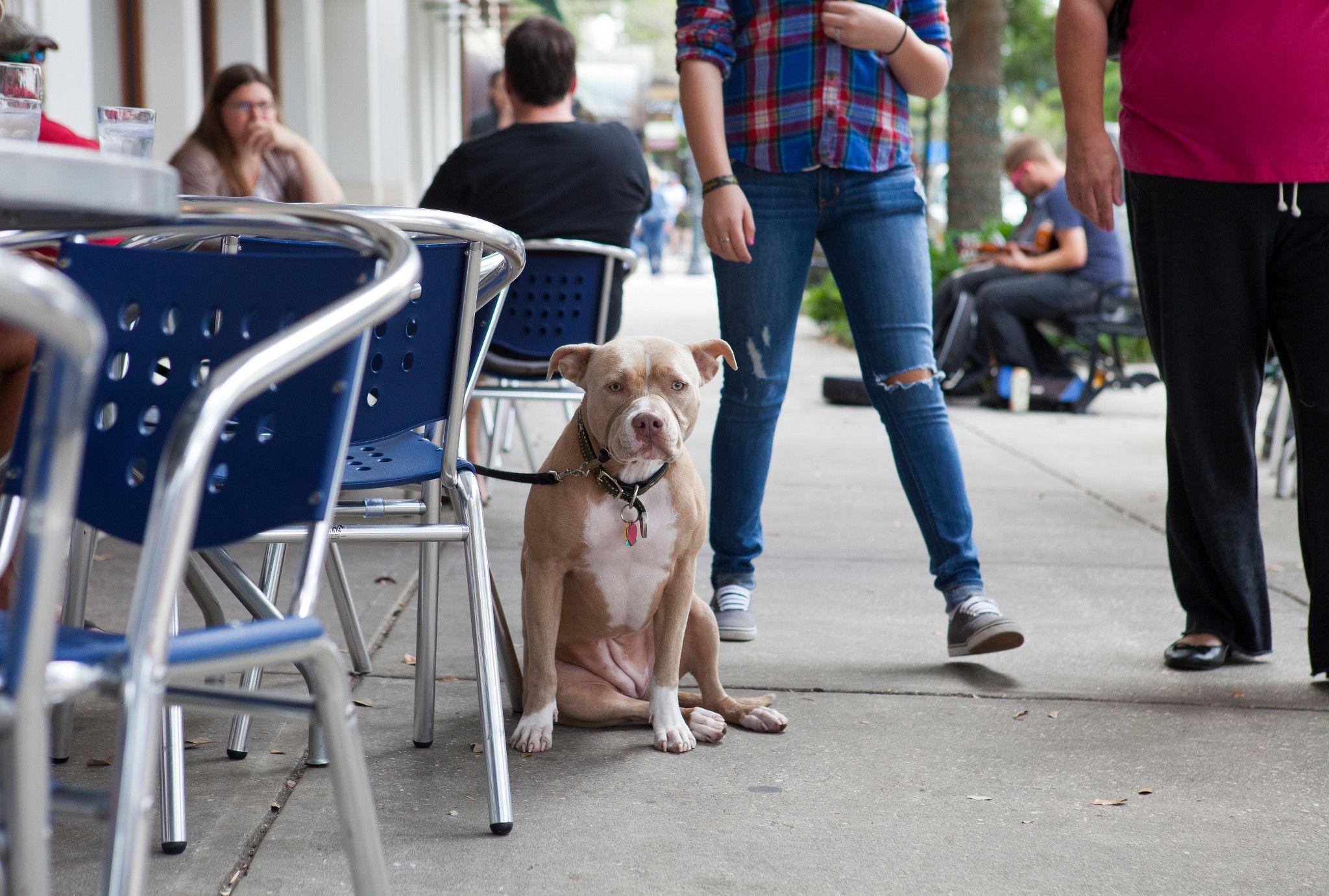 Top 10 Pet-Friendly Restaurants in Orlando