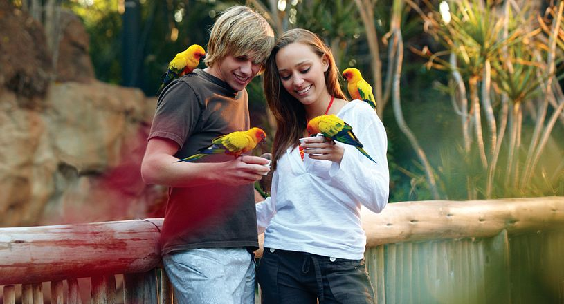 A couple of teens feeding four colorful birds inside the aviary at Discovery Cove