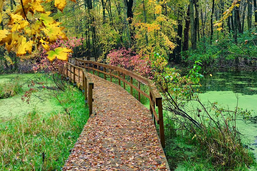 boardwalk over a wetlands area with a hint of fall colors