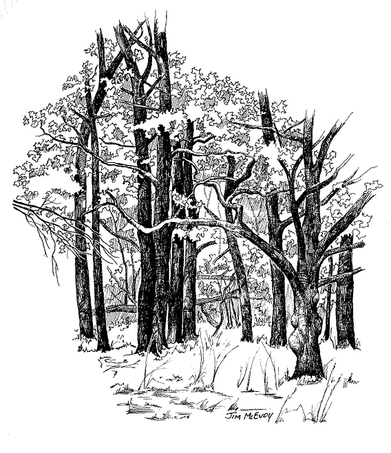 black and white drawing of a forest