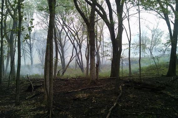 a forest area still smoldering after a prescribed burn