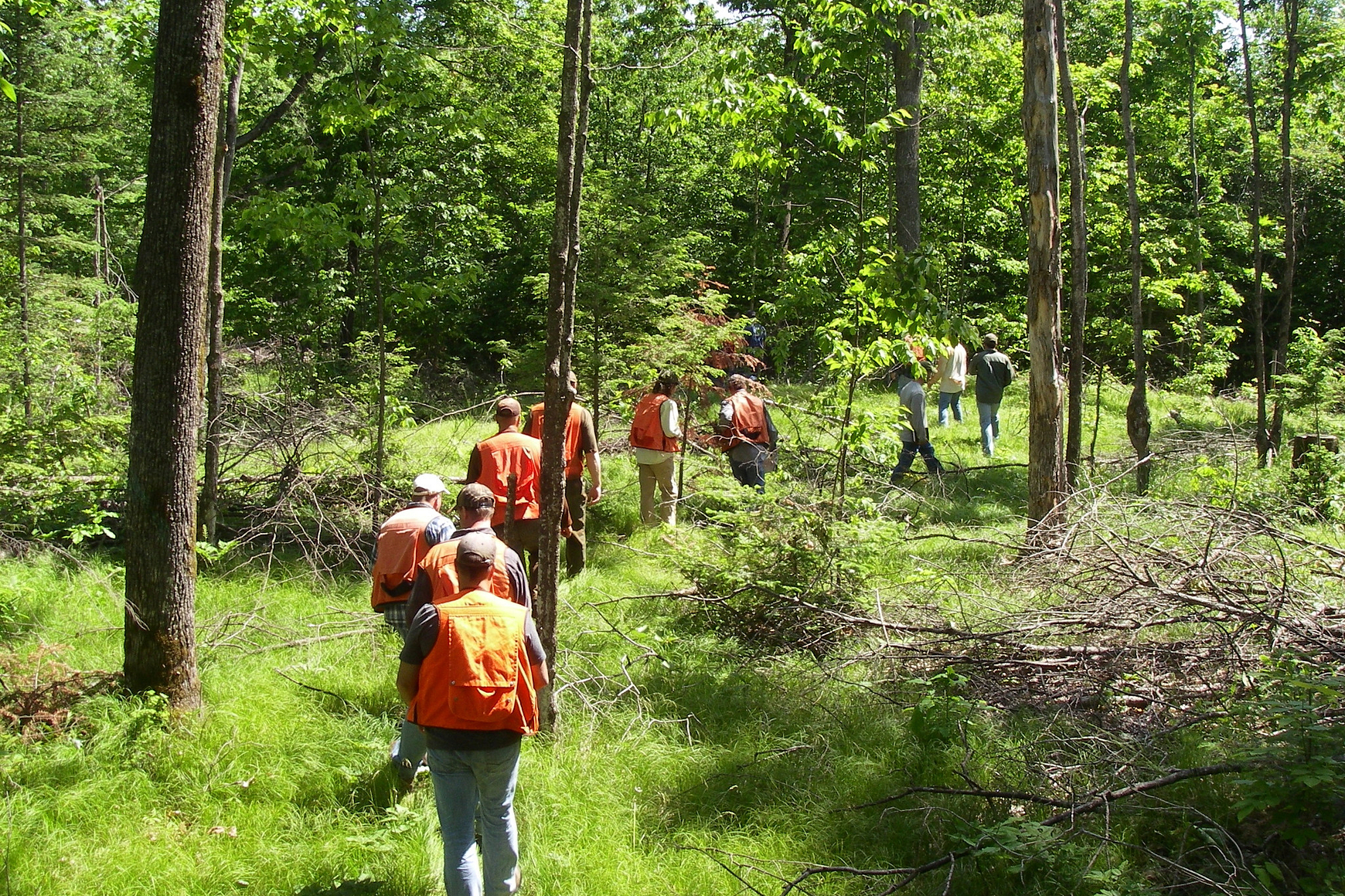 Group of people in orange vest walking in a line through the woods