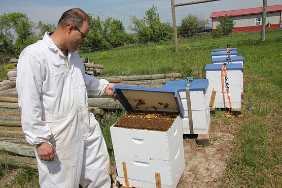 Man in white coveralls inspecting a bee hive in an apiary