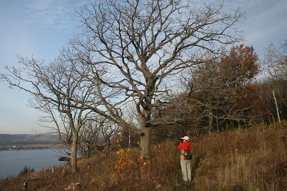 Bird Watching Maiden Rock State Natural Area