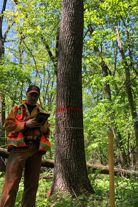 Photo of a DNR forester in the field looking at an iPad